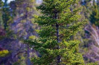 pinetreeside; source:www.adigitaldreamer.com