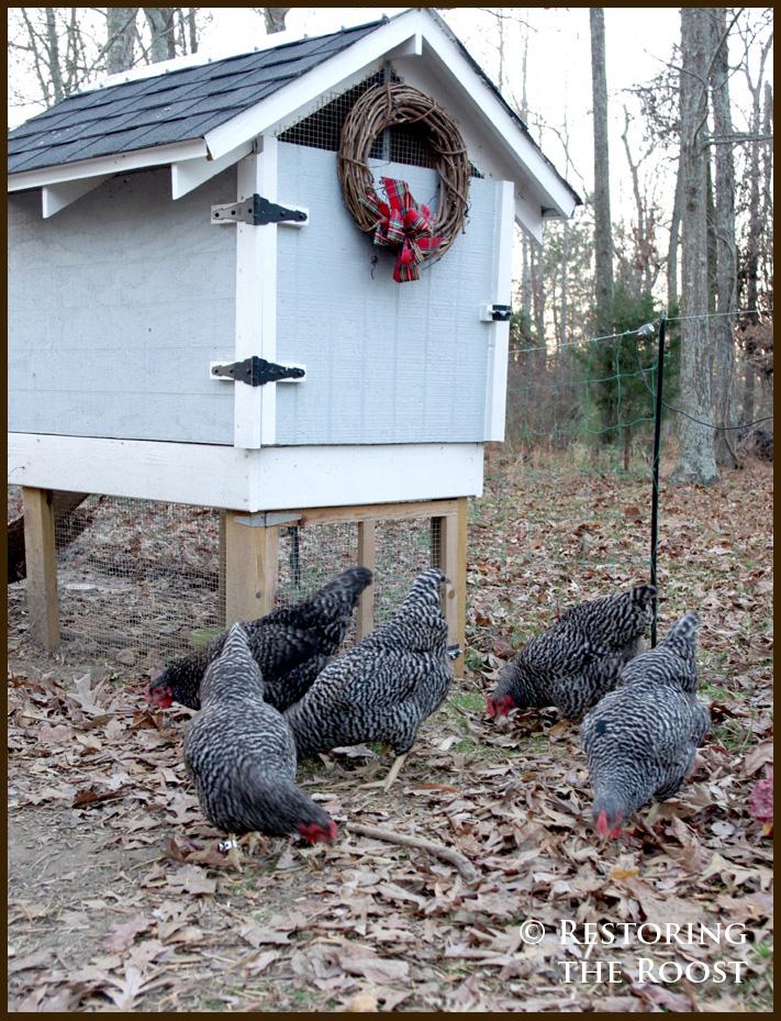 Restoring The Roost Breeding My Flock Part 2