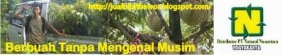 Agen Resmi DBibit Durian Bawor NASA