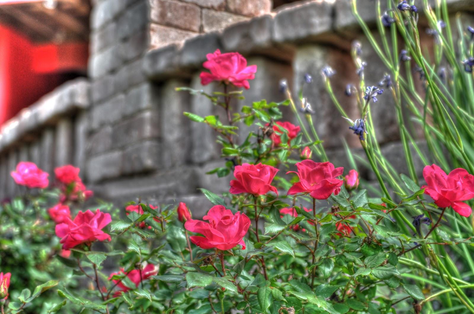 Nikon Sniper I Never Promised You A Rose Garden