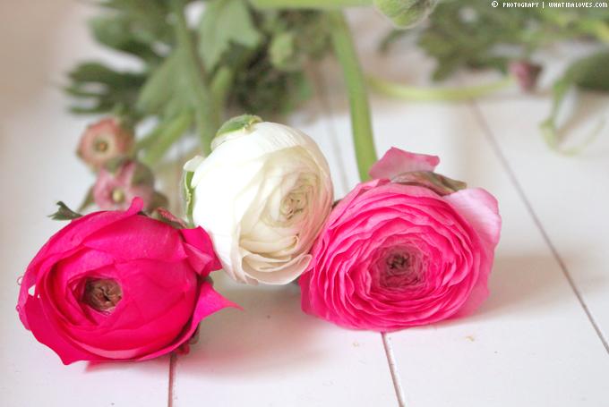 http://3.bp.blogspot.com/-tLarBCU8Ges/USKo0PSo9vI/AAAAAAAABUM/jXFngorIzbk/s1600/ranunkel2.jpg