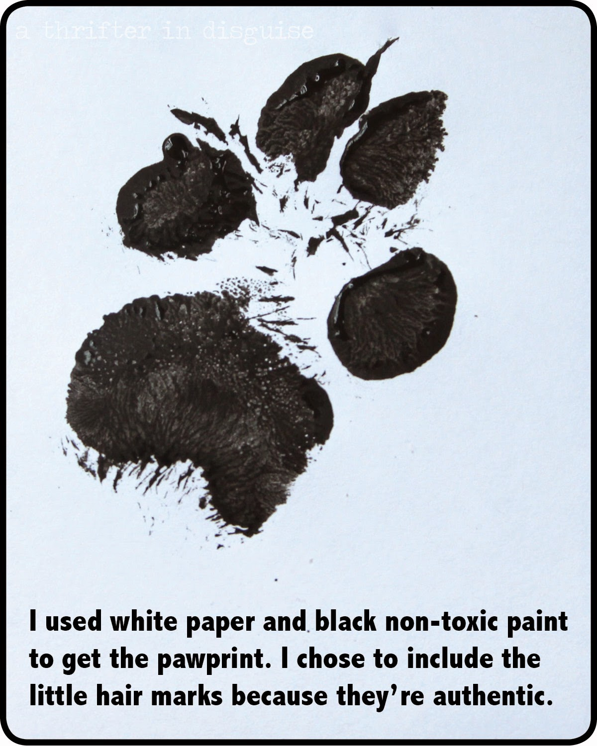 Using paint to get dog's paw print
