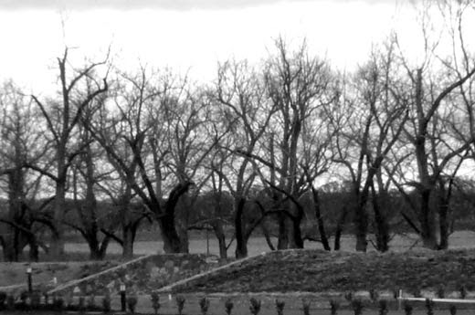 Bare-branched trees