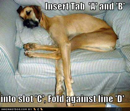 Funny Dog Pictures with Captions Wallpaper