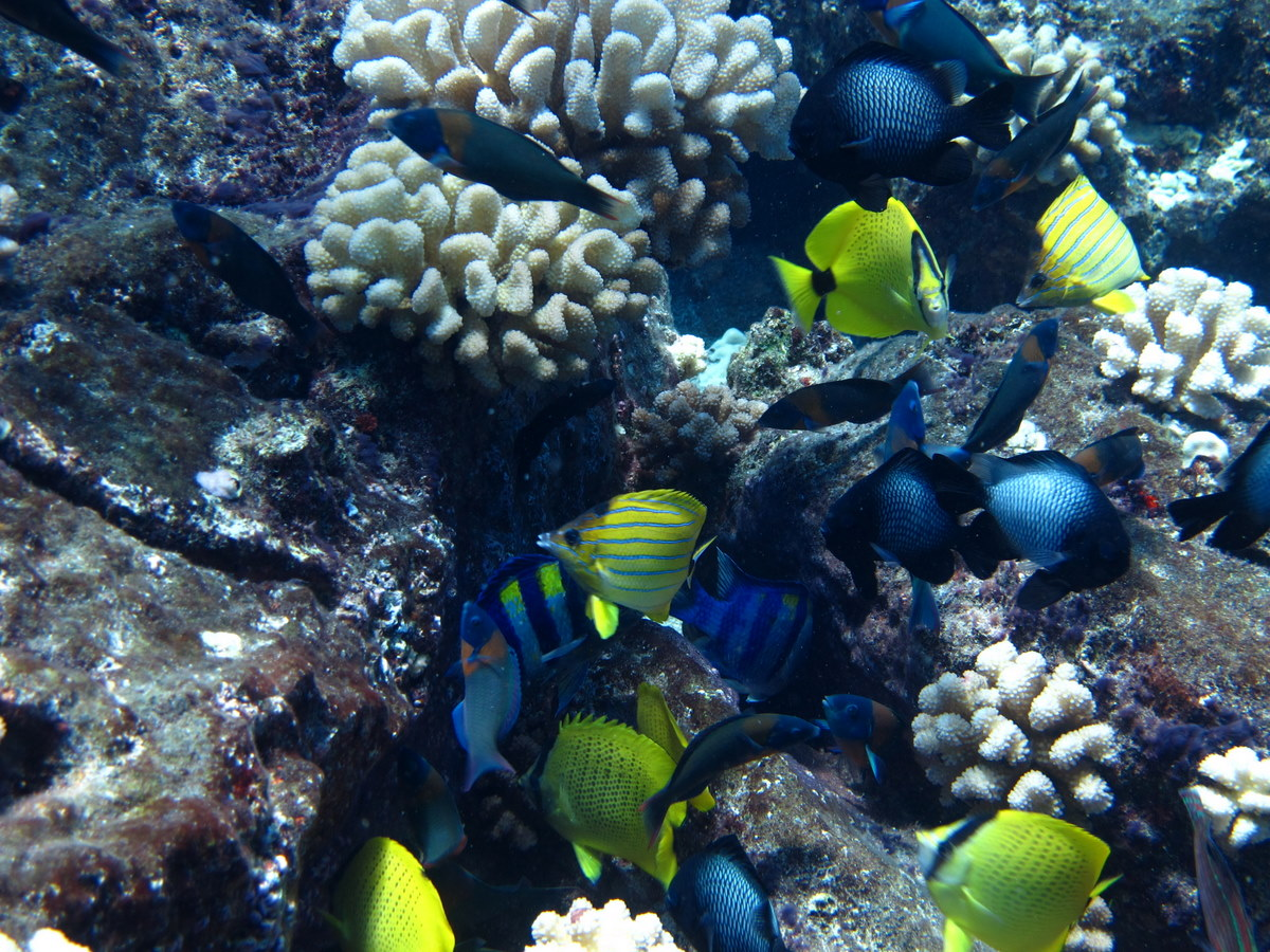 Capturing the moment wildside of molokai for Molokai fish and dive