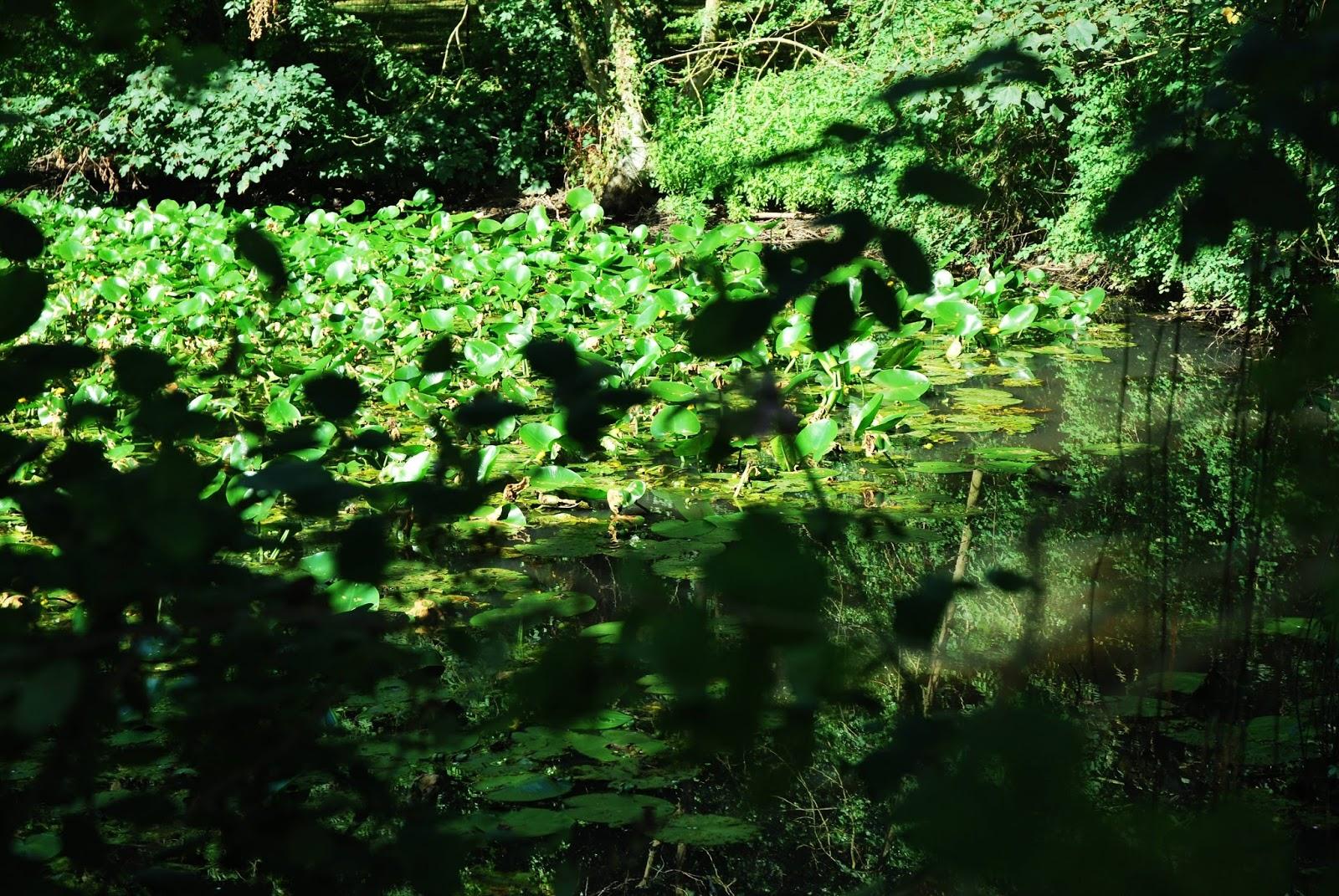 Histoires du nord 3 prendre l 39 ombre au jardin du groenhof for Au jardin welkom