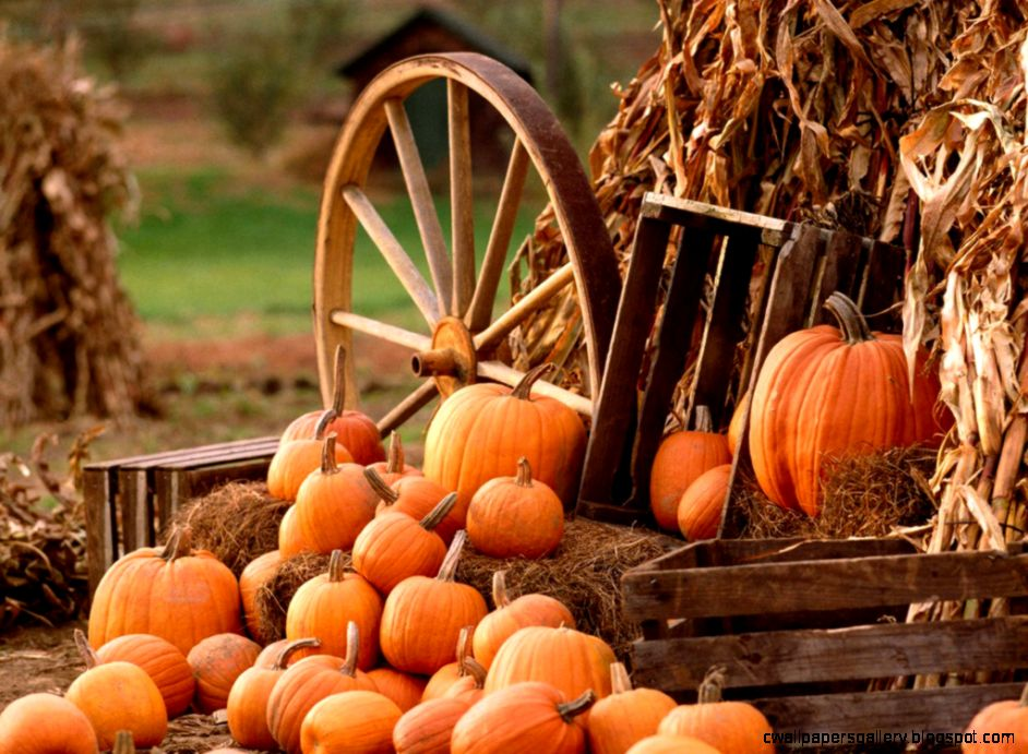 1000 images about FallThanksgiving Desktop Backgrounds on