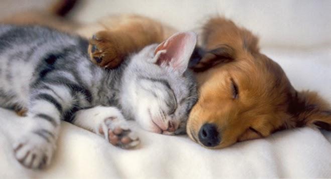 விலங்குகளின் -வினோத படங்கள்.. - Page 2 Kittens+and+Puppies_
