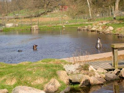 Sälarna i Höörs djurpark. foto: Reb Dutius