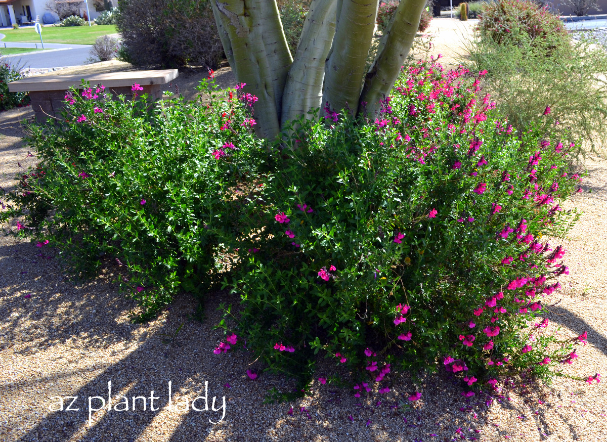 Plant palette for new landscape area trees and shrubs for Small flowering trees full sun