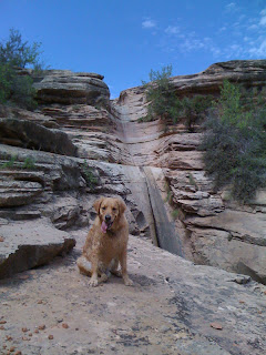 Scout at Rough Canyon Falls