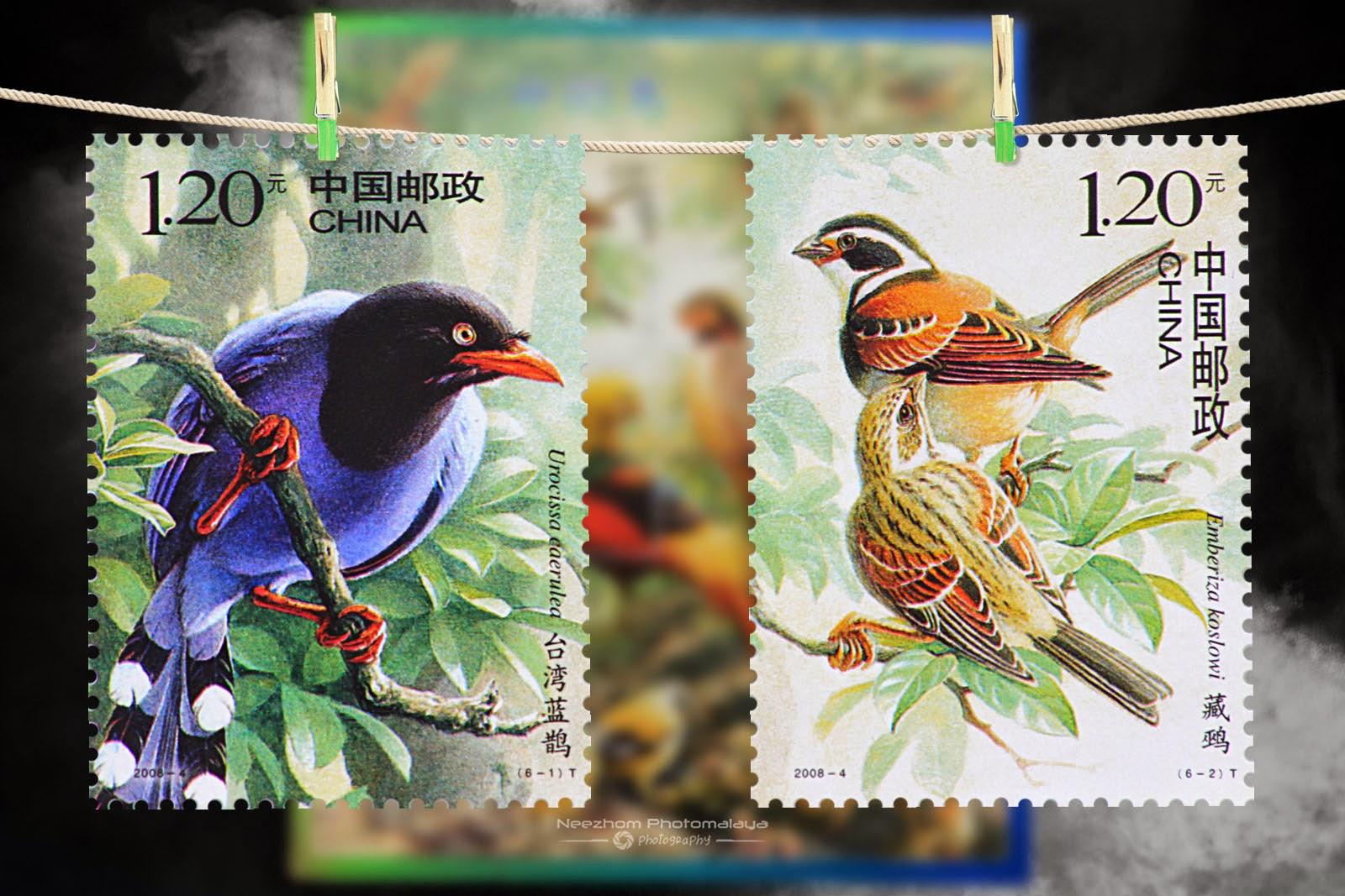 2008 Birds of China stamps - Urocissa caerulea, Emberiza koslowi 120 Fen