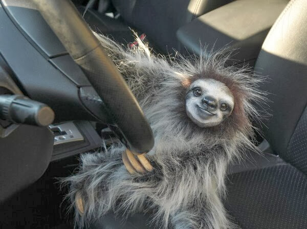 Funny animals of the week - 22 November 2013 (35 pics), sloth drives car