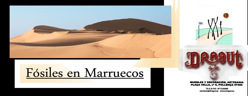 Fósiles en Marruecos