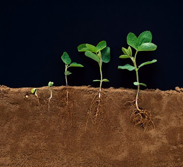 Toda semente quer brotar