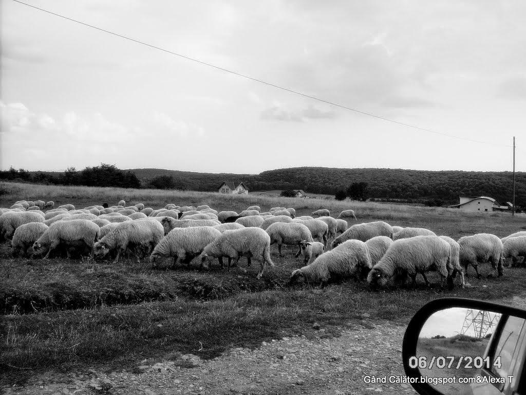 Zona Betfia  Rural view. countryside panorama in b&w.