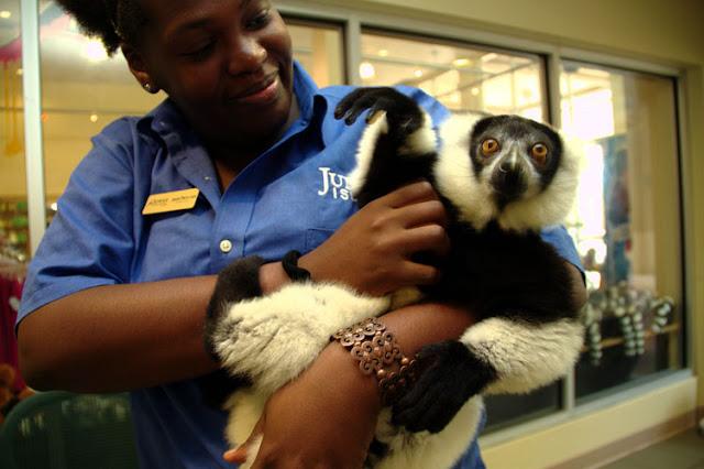 Jungle Island Miami Parque Zoo