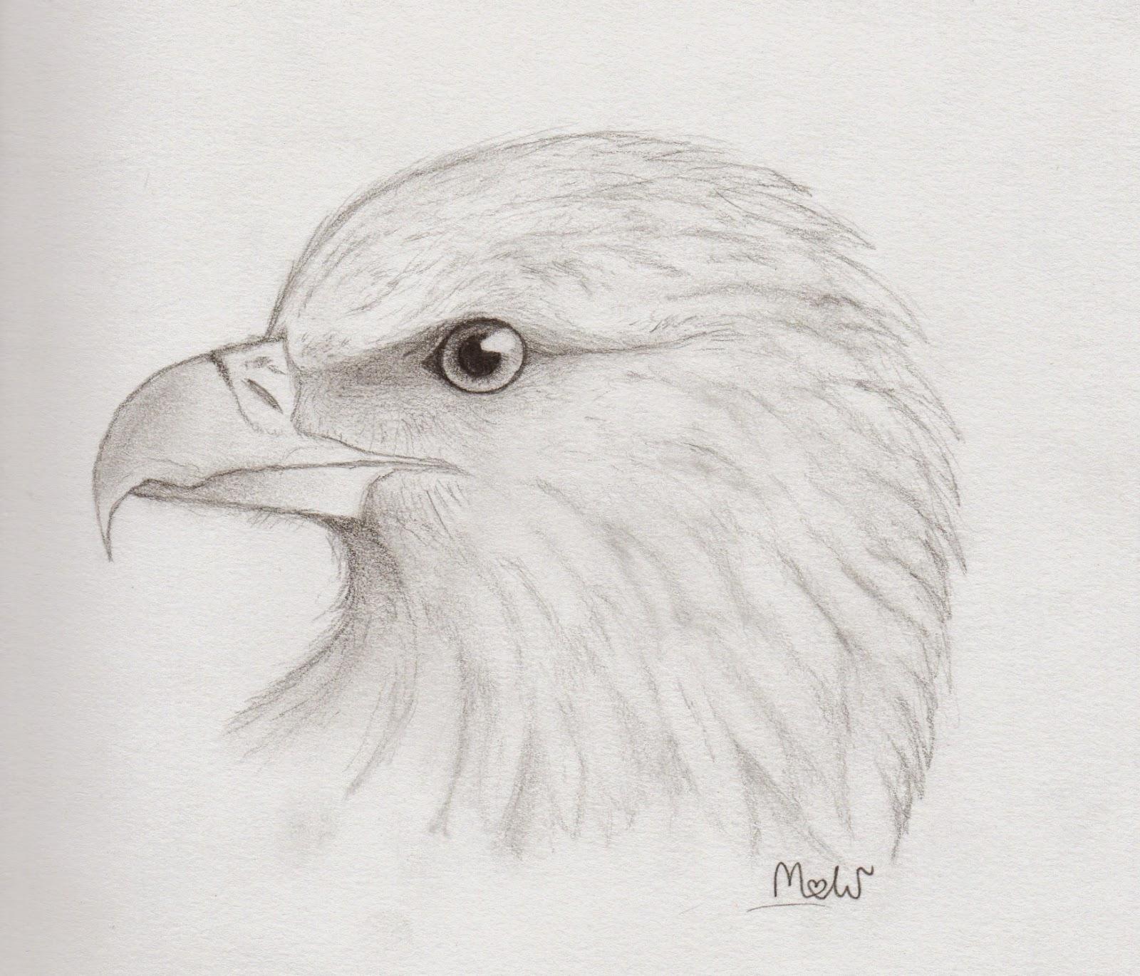 Ptasimi śladami Rysunki