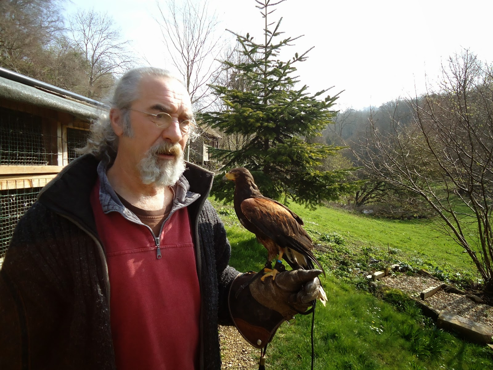Jay from West of England falconry and Harris hawk