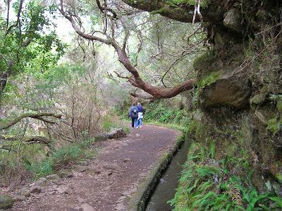 Bosque Laurisilva, levada, Madeira, Portugal, La vuelta al mundo de Asun y Ricardo, round the world, mundoporlibre.com