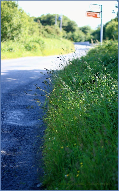 road, blue, green, grass,  Summer light © Annie Japaud Photography 2013
