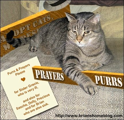 PRAYERS AND PURRS FOR SISTER GRACIE
