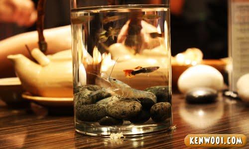 small prawn