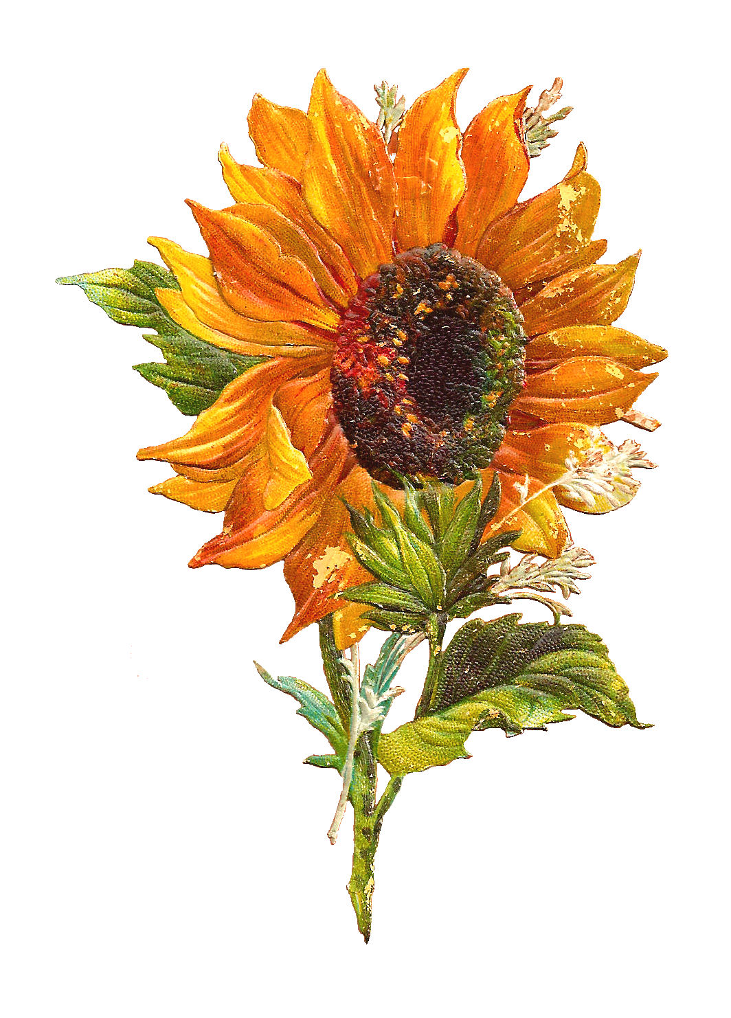 Free Flower Graphic  Sunflower Clip Art of 2 Victorian ScrapsSunflower Images Clip Art