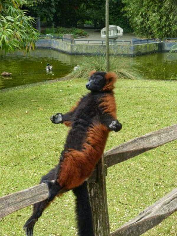 animal photos, funny photos, animal picture