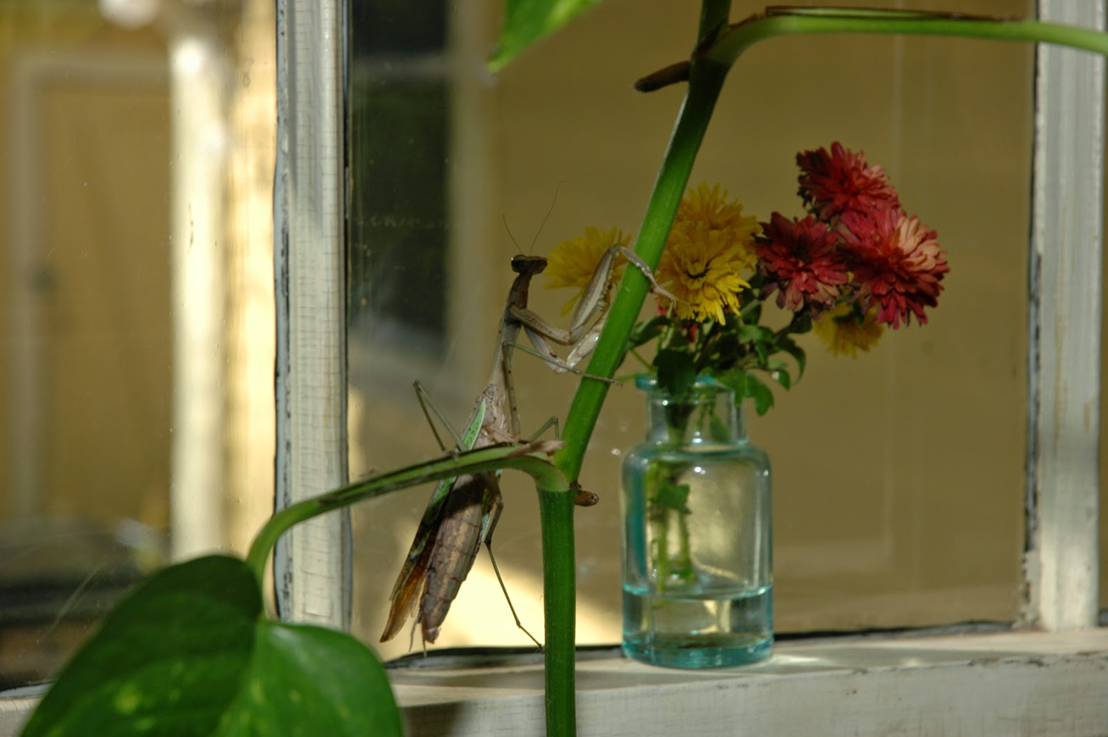 Tammy Sue Willey, Praying Mantis