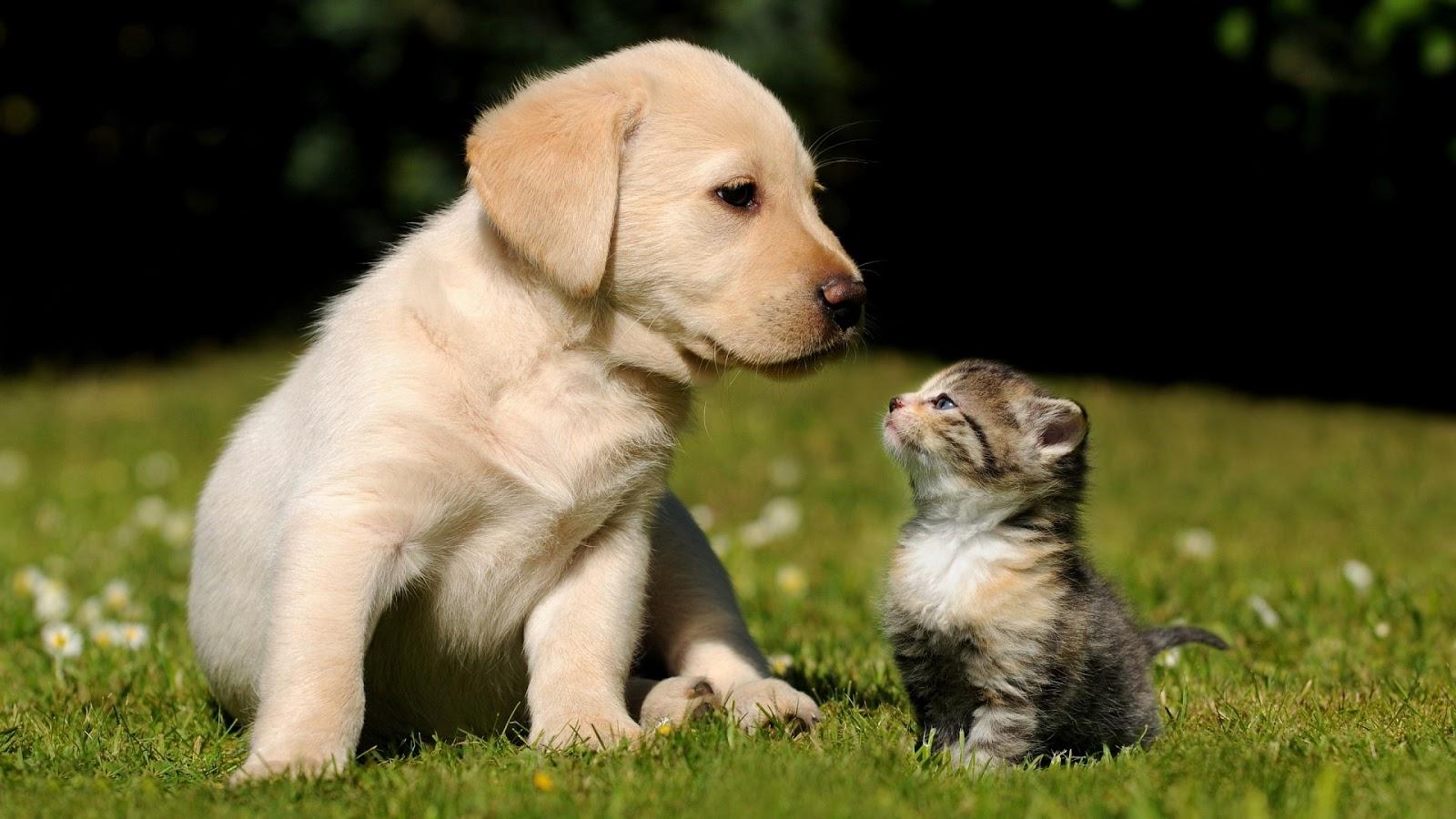 Puppy Looking to Kitten