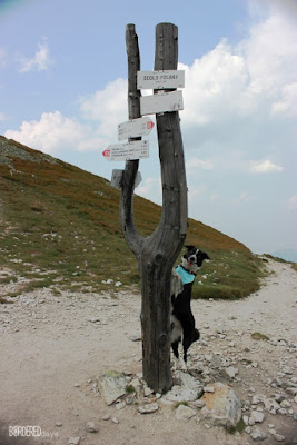 border collie on a mountain stack leaning against tourist signs