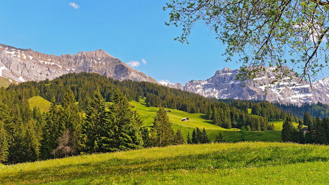 Switzerland Landscape Mountains Prairie Forest Trees HD Wallpaper