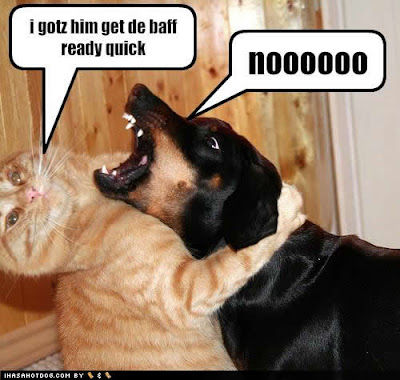 Funny dogs and cats  funny cats hd  funny cats and dogs farting  cats    Funny Cute Dog Pictures