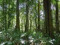 la selva humeda