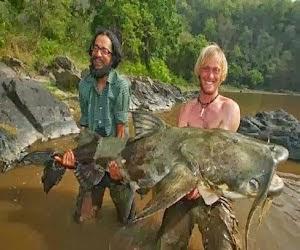 10 Ikan Lele Paling Besar Yang Pernah Di Tangkap Di Dunia