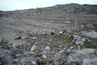 Ton Begemann Arctic Inuit Eskimo agriculture farm