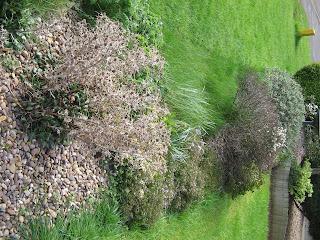 Messy front garden border