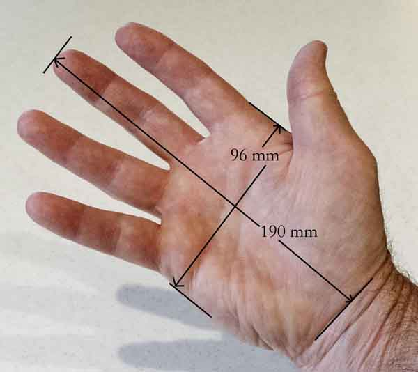 Functional Anatomy of the Hand | Camera Guide And Reviews