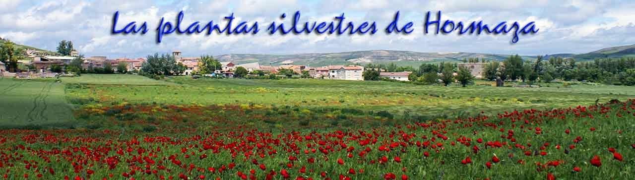 Las flores silvestres de Hormaza
