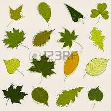 El delublog las plantas for Como se llaman los arboles que no pierden sus hojas