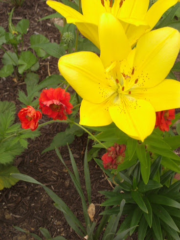 Perennial Color with Summer Bulbs