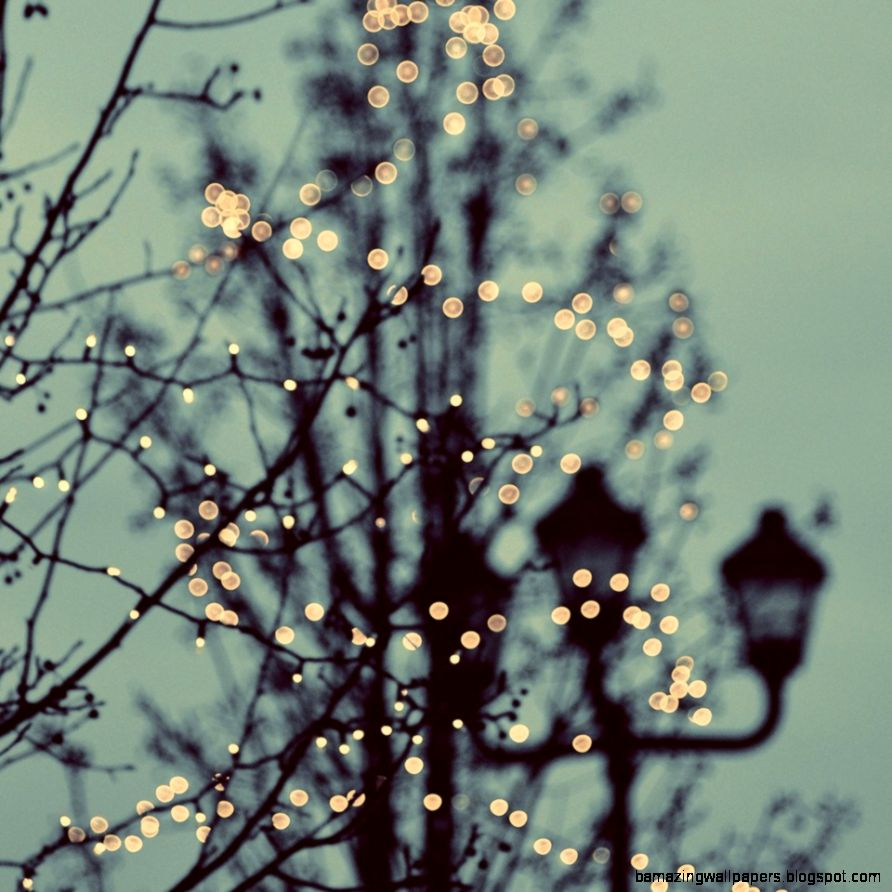 Winter Lights by Elle Moss  Crated