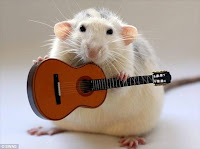 White rat playing guitar