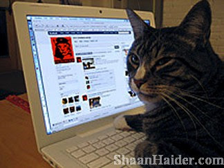 funnyfacebook cat