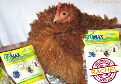 Probiotics, a Natural Choice for Healthy Chickens