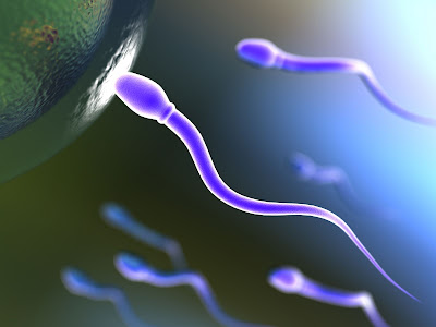 Nacimiento del hombre y espermatozoides en biologia