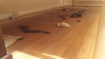 Esto es lo que había debajo de mi cama el día que me instalé