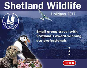 Shetland Wildlife - the No.1 choice. ATOL 9151