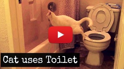 Watch Ender the Cat try to use the Toilet as it fails adorably via geniushowto.blogspot.com cat videos